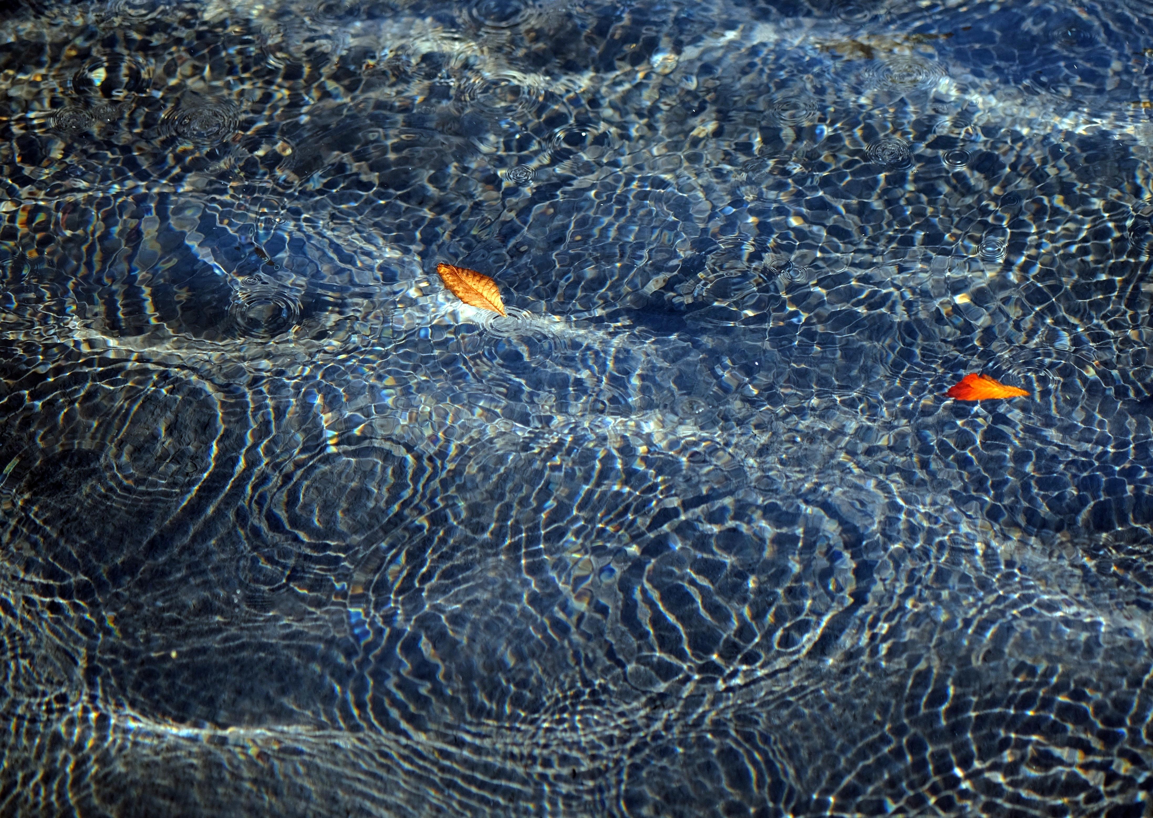 Unpsplash leaves in Water
