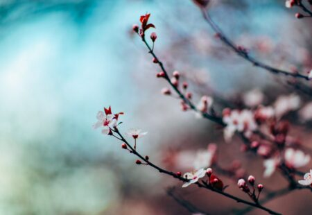 Spring into Life with Continuum